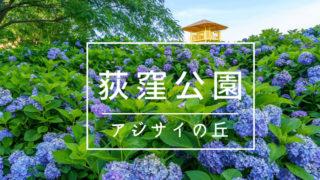荻窪公園アジサイの丘