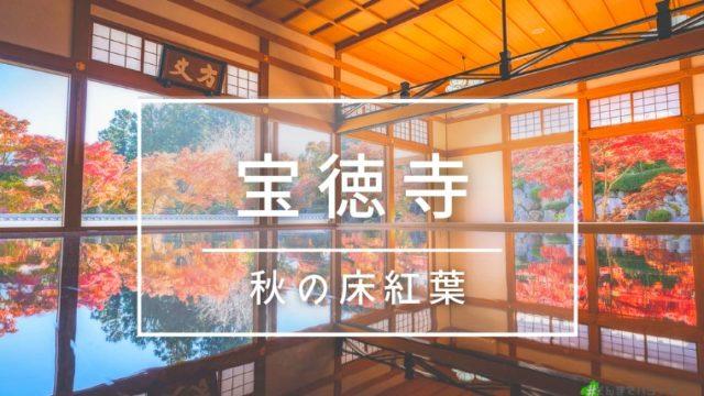 宝徳寺:秋の床紅葉
