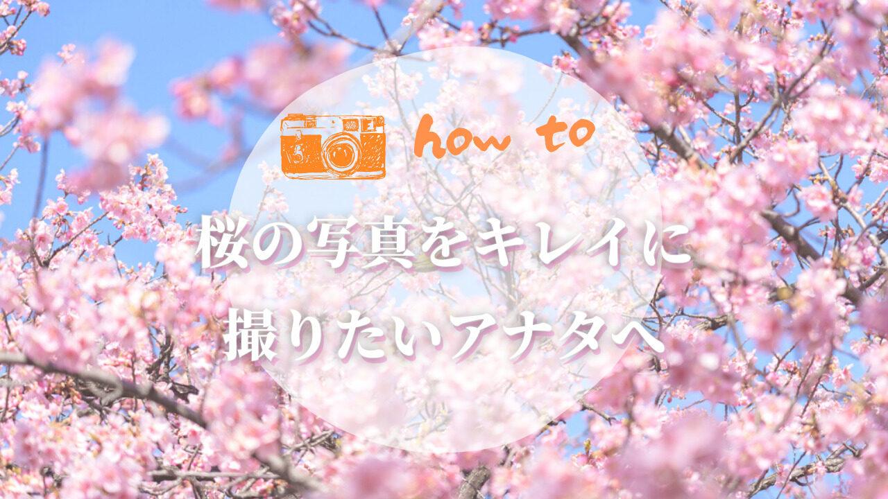 桜のキレイな撮り方