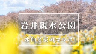 岩井親水公園