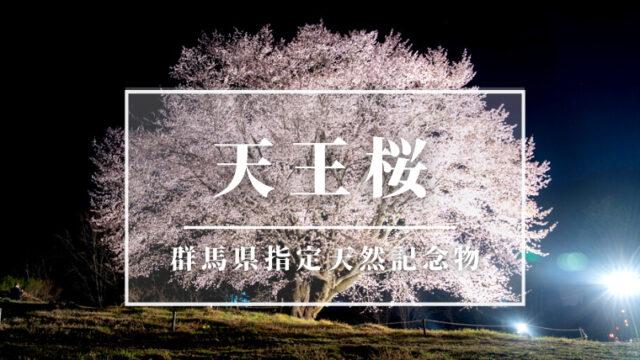 天王桜アイキャッチ