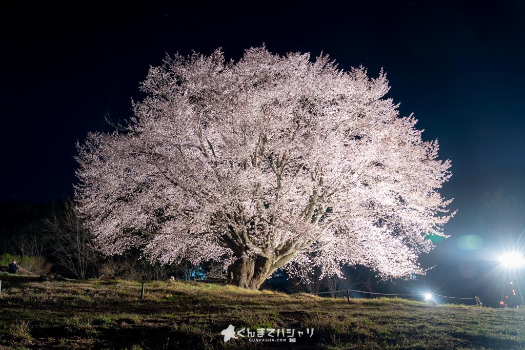 針山の天王桜