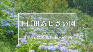 下仁田あじさい園