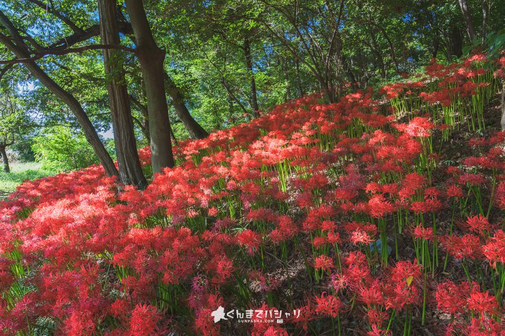 境御嶽山自然の森公園
