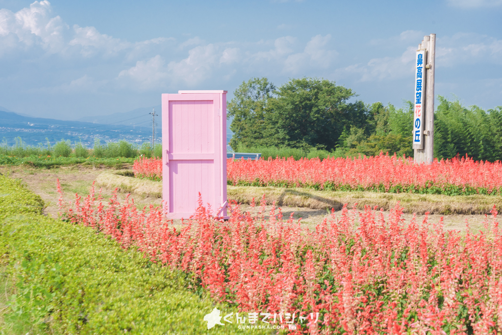 鼻高展望花の丘(キバナコスモス)